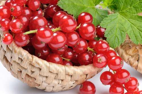 грейпфрут: полезные свойства и противопоказания, принципы употребления